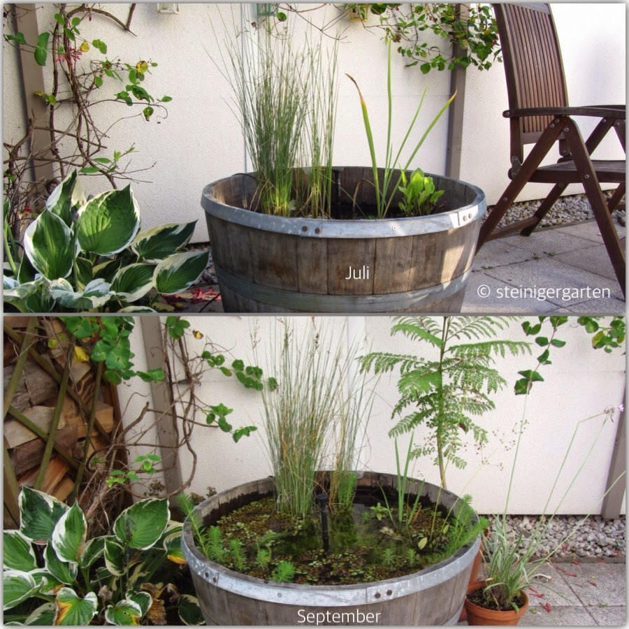miniteich geflutet berwinterung der teichpflanzen bergblumengarten. Black Bedroom Furniture Sets. Home Design Ideas