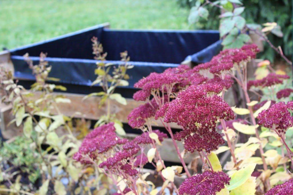 Gunstig Gartnern Mit Hochbeeten Bergblumengarten