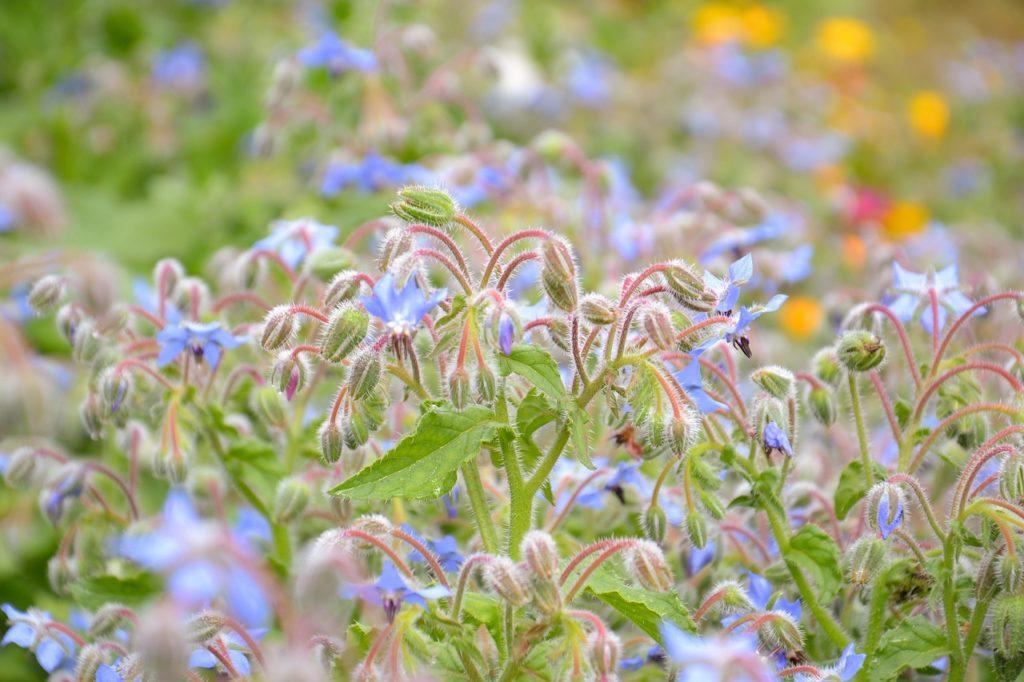 Gartennutzung Im Mietgarten Bergblumengarten