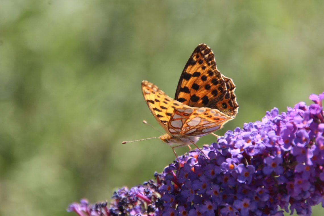 Artenvielfalt Im Garten Erhalten Was Kann Ich Tun Bergblumengarten